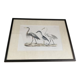 Newly Framed Antique Bird Print For Sale