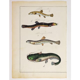 Hand Colored Eels & Fish Woodcut Print Preview