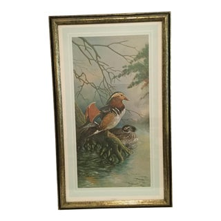 Realist Basil Ede Signed Framed Mandarins Print For Sale