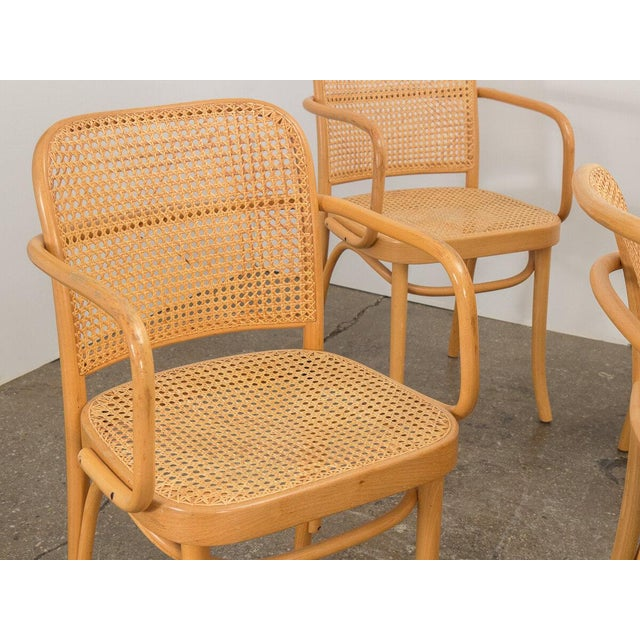 Joseph Hoffman Bentwood Chairs - Set of 8 For Sale - Image 10 of 11