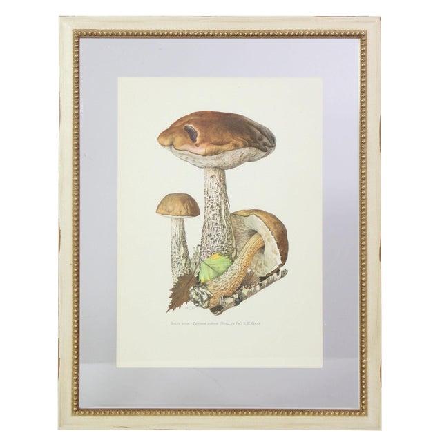 Antique French Botanic Mycology Study Lithograph - Birch Bolete Mushroom For Sale