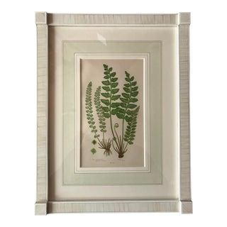 19th Century French Sea Spleenwort Fern Lithograph For Sale