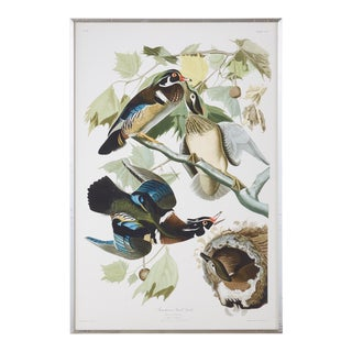 Audubon Summer or Wood Duck Plate #206 Havell Edition For Sale