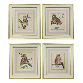 Four Hand Colored Engravings of Owls by f.n Martinet For Sale