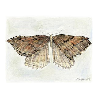 """Modern """"Moth I"""" Art Print Giclee by Kathleen Ney For Sale"""