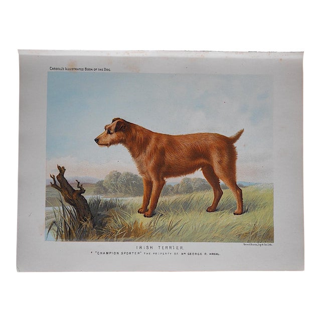 Antique Dog Lithograph - Irish Terrier - Image 1 of 3