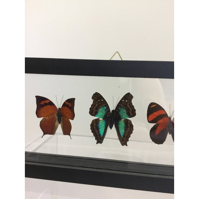 Butterfly Specimen in Shadow Box Frame For Sale In Wichita - Image 6 of 8