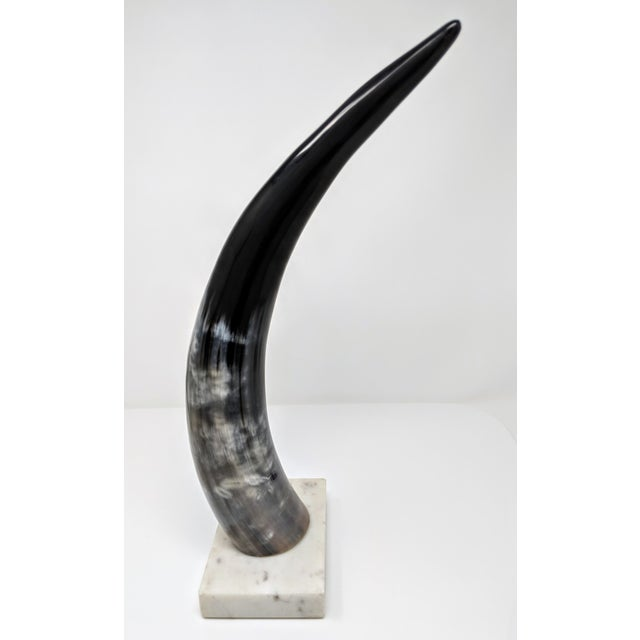 Bone Horn on Marble Base For Sale - Image 7 of 12