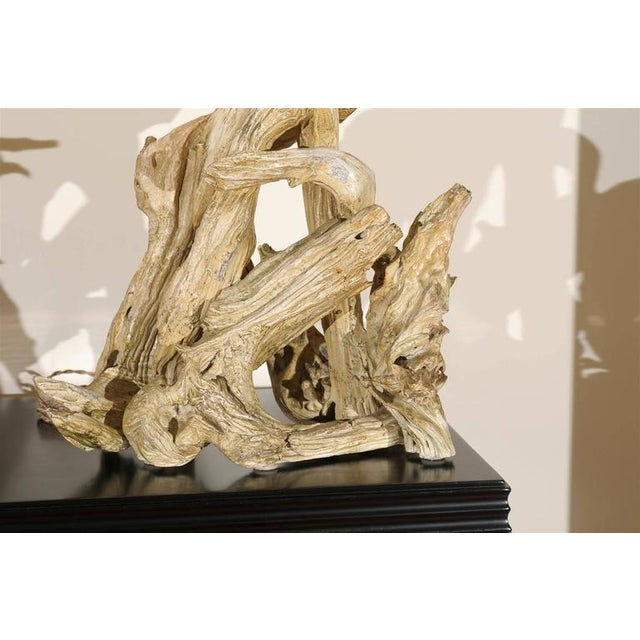 1950s Restored Pair of Large-Scale Vintage Driftwood Lamps in Gesso For Sale - Image 5 of 10