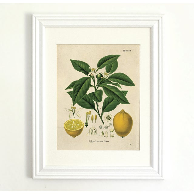 Botanical Lemon Citrus Fruit Print Poster - Image 2 of 3