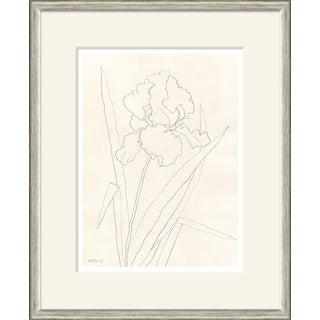 Bearded Iris Framed Art Print For Sale