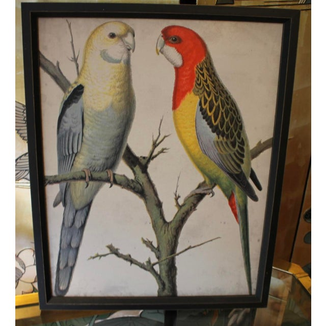 2010s Framed Bird Wall Art Prints Pictures - Set of 4 For Sale - Image 5 of 9