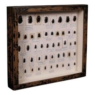 Vintage Framed Beetle Collection For Sale