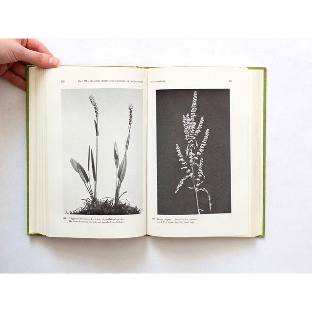 1967 Vintage Taxonomy of Flowering Plants Book For Sale In Dallas - Image 6 of 11