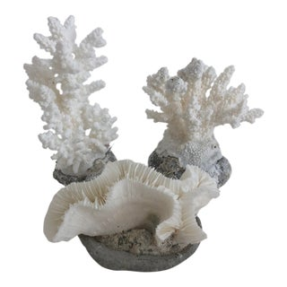 Natural White Seedling Coral - Set of 3 For Sale