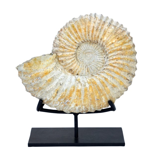 Large Fossilized Ammonite on Custom Iron Stand For Sale