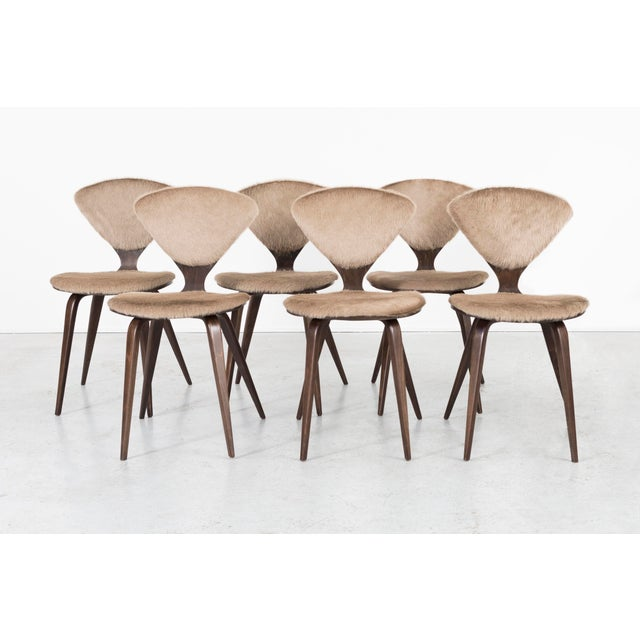 Set of 6 Norman Cherner for Plycraft Dining Chairs For Sale - Image 11 of 11