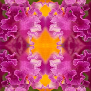 """""""Laced Ill"""" Floral Botanical Pink, Orange Limited Edition Color Photography For Sale"""