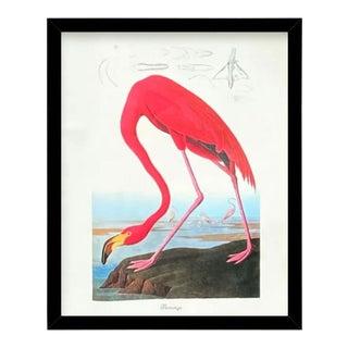 Custom Black Wood Frame of Authentic Vintage John James Audubon Flamingo Bird & Botanical Print For Sale