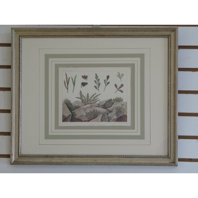 Traditional Vincent Brooks Day & Sons Decorative Lithograph Fern Prints - a Pair For Sale - Image 3 of 13