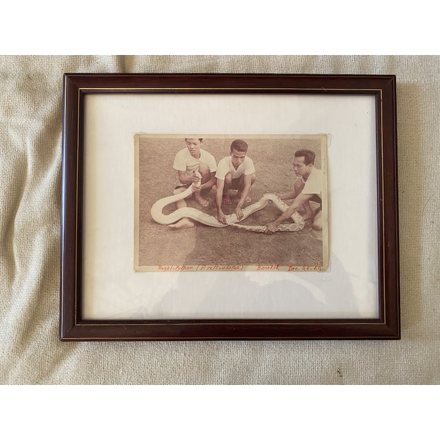 1960s Framed Vintage 1969 Thai Documentary Style Snake Photograph For Sale - Image 5 of 5