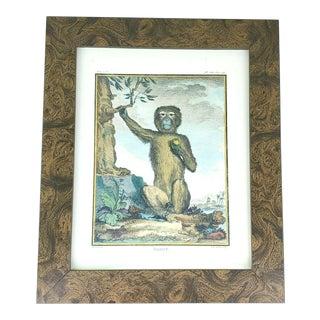 Magot Monkey Book Plate Art For Sale