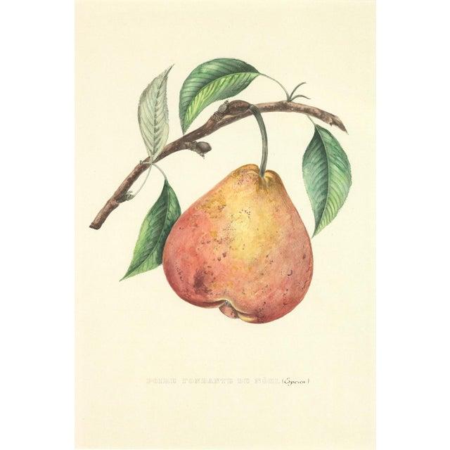 Traditional Original Hand-Colored Lithograph: Commission Royale De Pomologie. Annales De Pomologie. Brussels: F. Parent, 1853-1860. (3) For Sale - Image 3 of 6