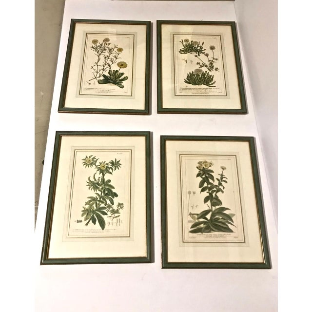 18th C. Botanical Engravings - Set of 4 For Sale - Image 9 of 10