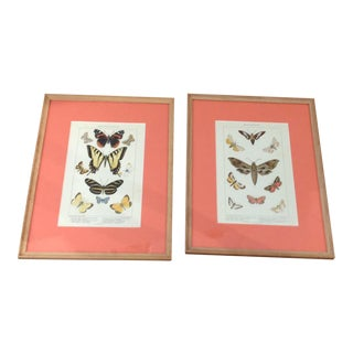 Early 20th Century Antique Framed Butterfly Chromolithographs - a Pair For Sale