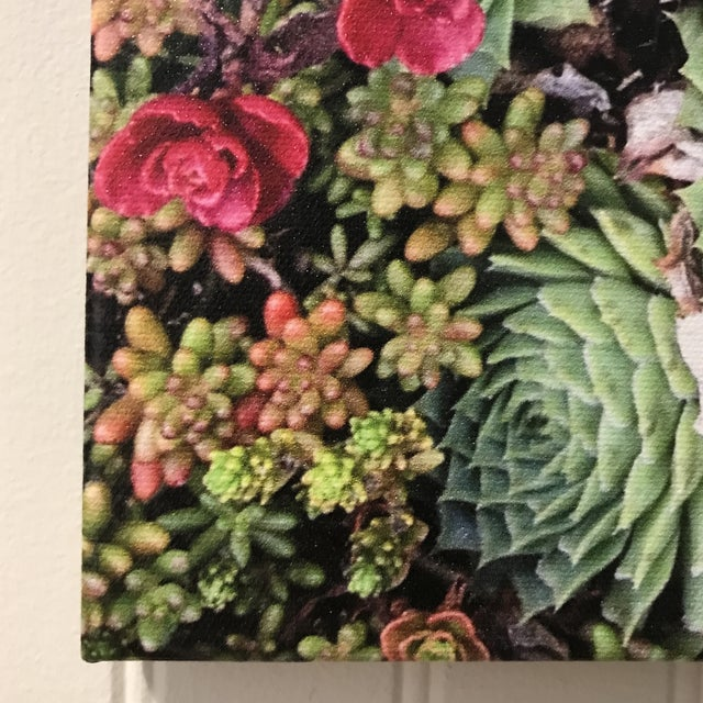"""""""Succulents"""" Photograph on Canvas For Sale In New York - Image 6 of 10"""