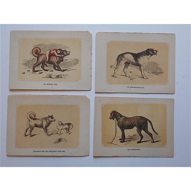 These diminutive chromolithographs depict several dog breeds. They were printed in the late 19th century and are printed...