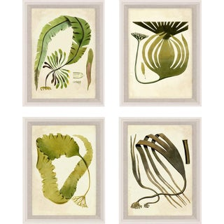 Harvey Seaweeds, Set Of 4, Framed Artwork For Sale