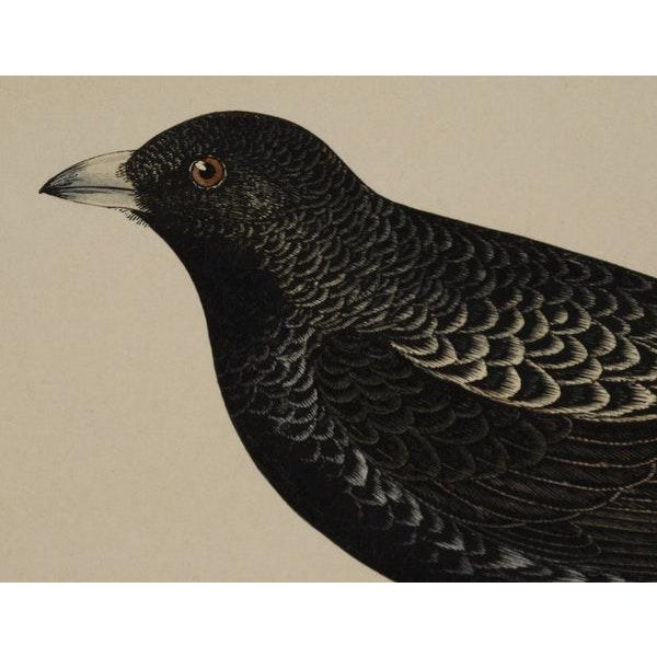 Antique Hand-Colored Aviary Wood Engravings - A Pair - Image 4 of 9