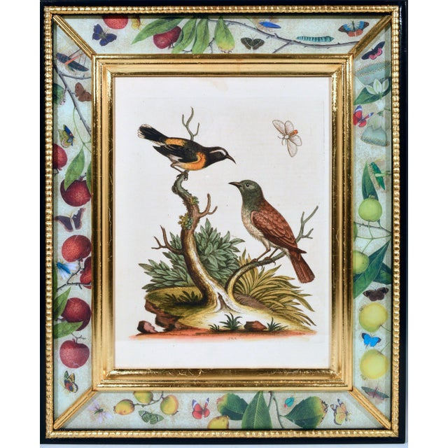 Green C. 1740 George Edwards Engravings of Birds - Set of 12 For Sale - Image 8 of 12