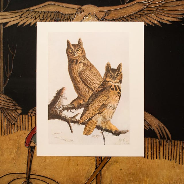1960s Cottage Lithograph of Great Horned Owl by Audubon For Sale In Dallas - Image 6 of 9