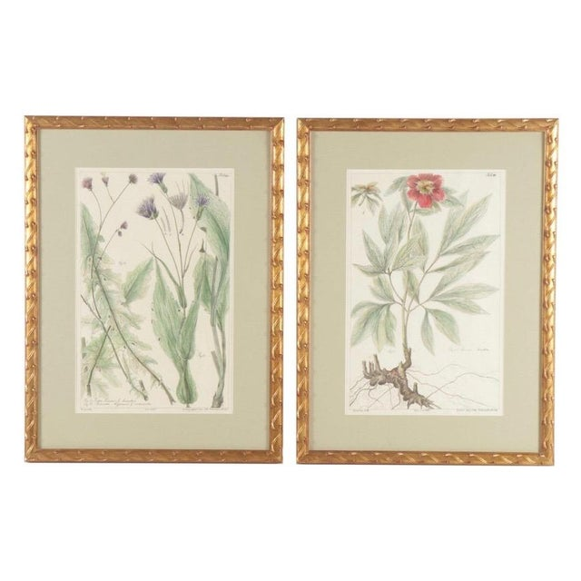 19th Century Hand-Colored Botanical Lithograph Pair For Sale - Image 10 of 10