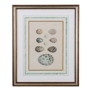 Antique Egg Chromolithograph Print