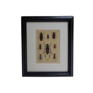 Antique Beetle Plate C. 1912 For Sale