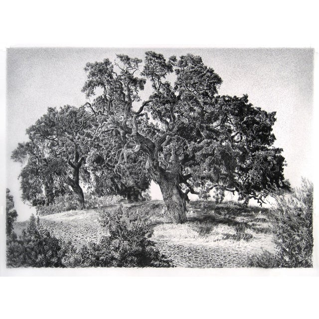 "Mid-Century Modern Contemporary ""Two Live Oakes"" Rick Shaefer Charcoal Print For Sale - Image 3 of 3"