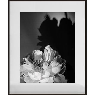 """Coral Charm Peony III"", Contemporary Photograph by Jean Karotkin, Framed For Sale"