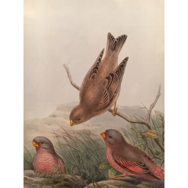 John Gould & William Hart Bird Illustration in the Age of Darwin For Sale - Image 9 of 11