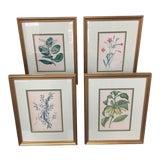 Image of Antique Botanical Prints - Set of 4 For Sale