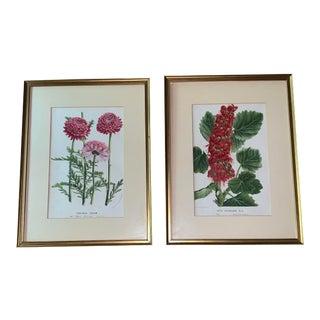 1920s Vintage Gilt Framed and Matted Botanical Prints - A Pair For Sale