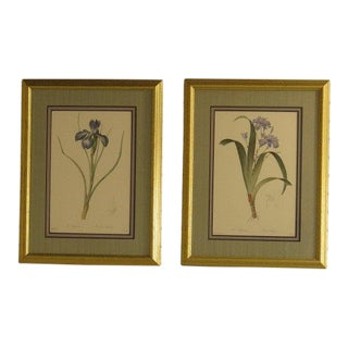 """Iris"" Floral Decorative Framed & Matted Prints - a Pair For Sale"