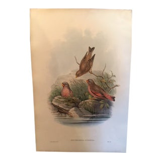 John Gould & William Hart Bird Illustration in the Age of Darwin For Sale