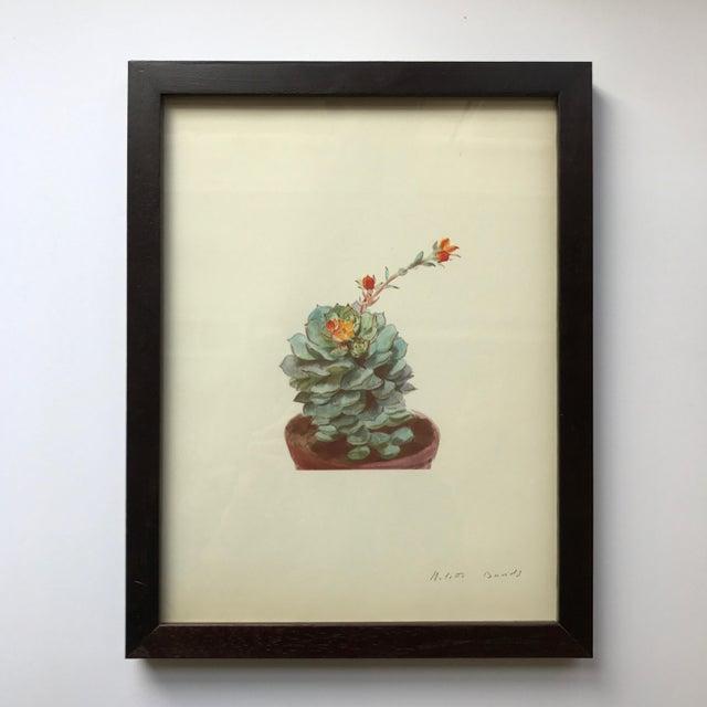 Framed Rock Plants - Set of 32 - Image 10 of 11