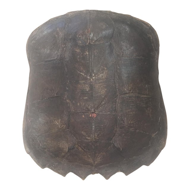 Natural Turtle Shell Wall Accent - Image 1 of 8