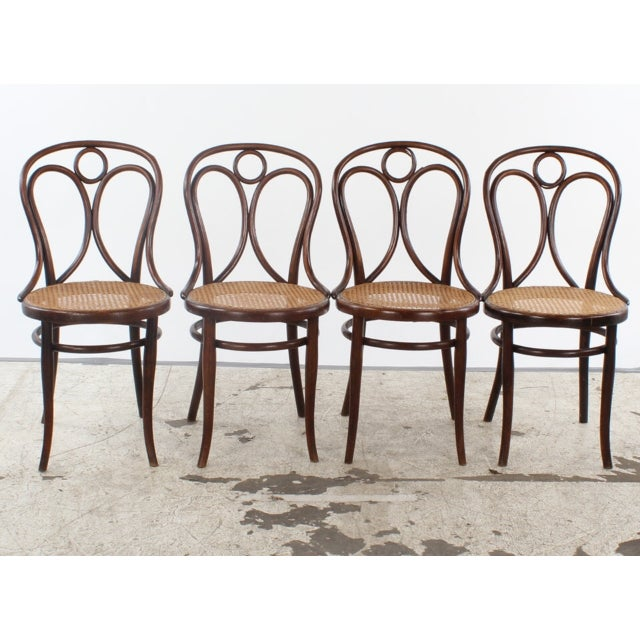 Antique Thonet No. 19 Bentwood Chairs - Set of 4 For Sale - Image 10 - Antique Thonet No. 19 Bentwood Chairs - Set Of 4 Chairish