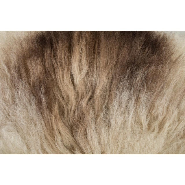 """Contemporary Hand-Tanned Sheepskin Pelt - 2'2""""x3'6"""" For Sale - Image 4 of 6"""