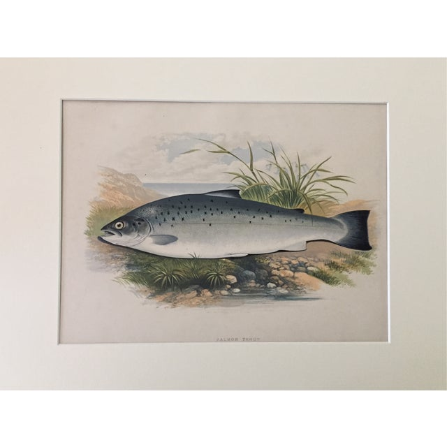 1879 Houghton's London Salmon Trout Lithograph - Image 2 of 3
